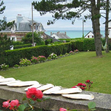 Ample garden - Villa Le Nautilus